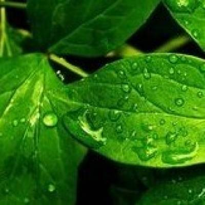 UNDERSTANDING LEAF TRANSPIRATION MECHANISMS WITH LGR WATER VAPOUR ISOTOPIC ANALYZER